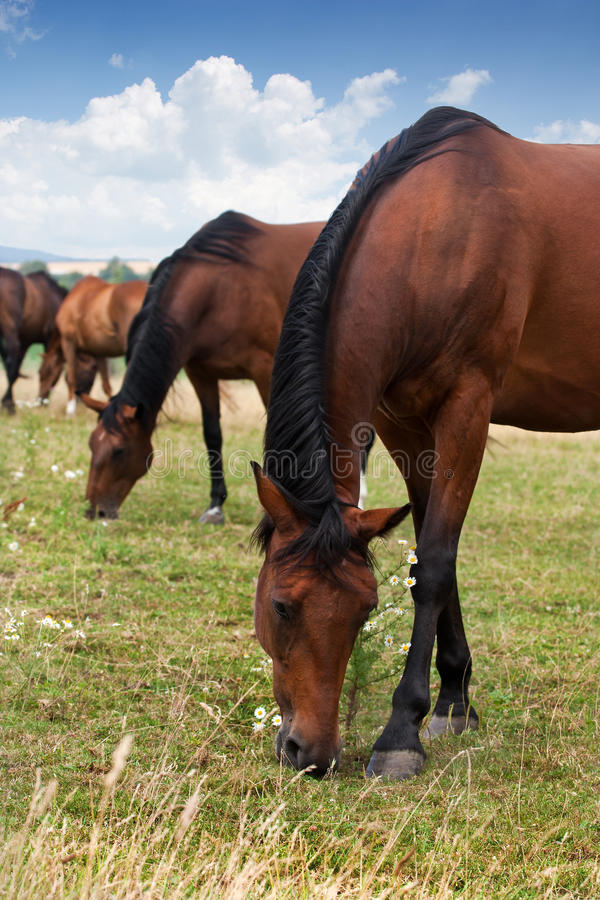 Download Herd of Horses stock photo. Image of economy, sunlight - 20319236