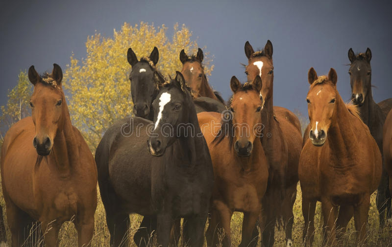 Download A herd of horses close up stock photo. Image of wildlife - 83619214