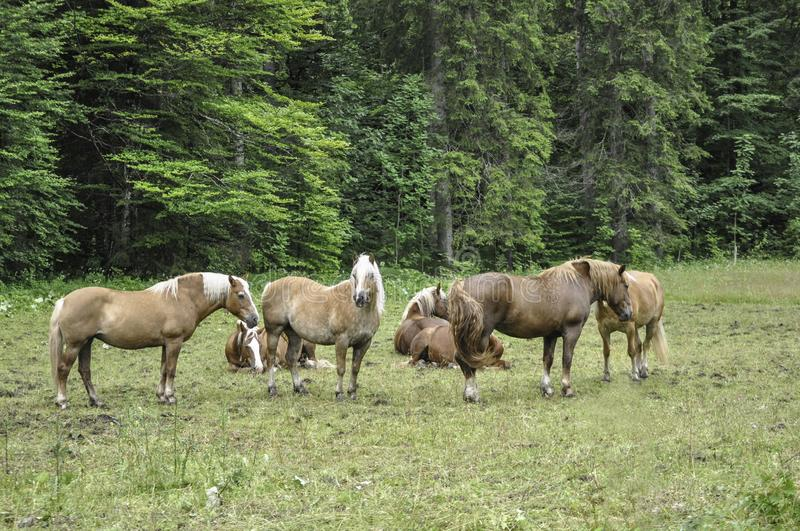 Herd of horses feeding on a meadow stock photo