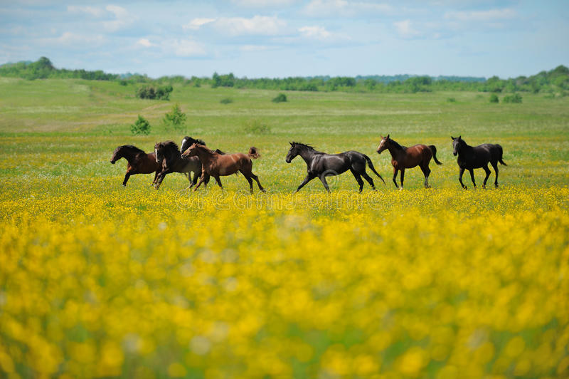 Herd of the horses in the field stock photos