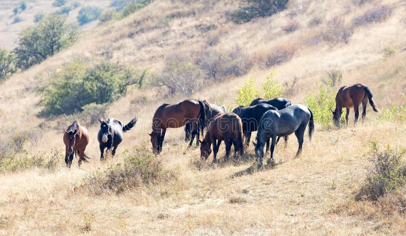 Herd of horses in the pasture in the fall stock photos