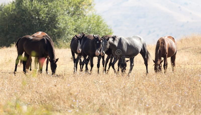 Herd of horses in the pasture in the fall royalty free stock photography