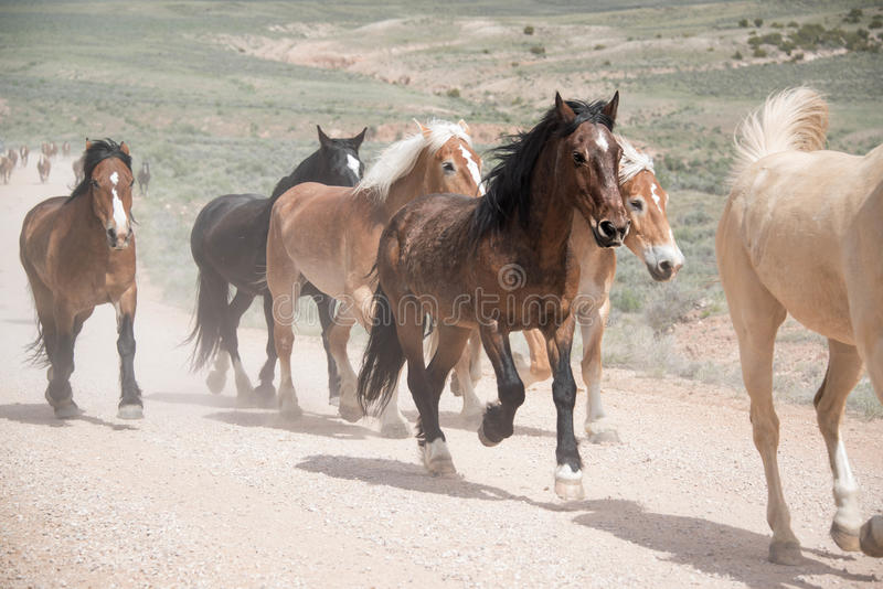 Herd of horses running along dusty road royalty free stock photo