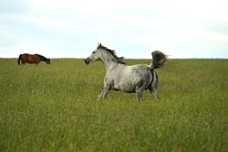 Download Horse Stock Photography - Image: 29797212
