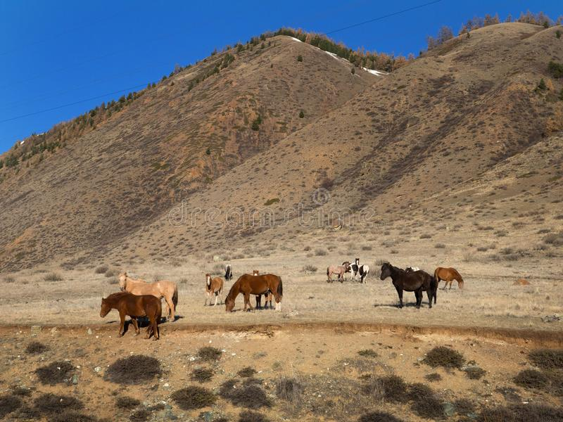 A herd of horses on a rural road in autumn. stock images