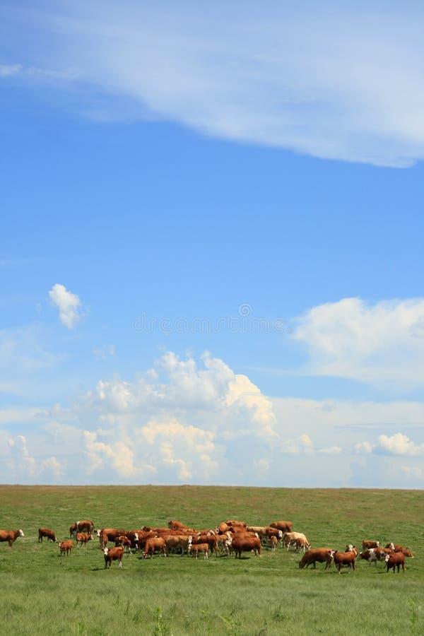 Free Herd Of Hamburgers Stock Photos - 4587703