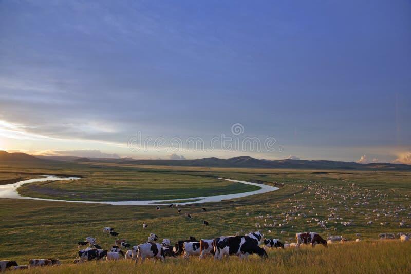 Download Herd In Prairies Sunset Glow Stock Image - Image: 15666261