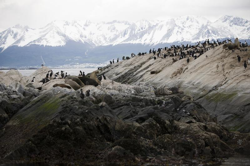 Herd of seals lounging together with migratory birds in Antarctica. A herd of seals lounging together with migratory birds in Antarctica stock photo