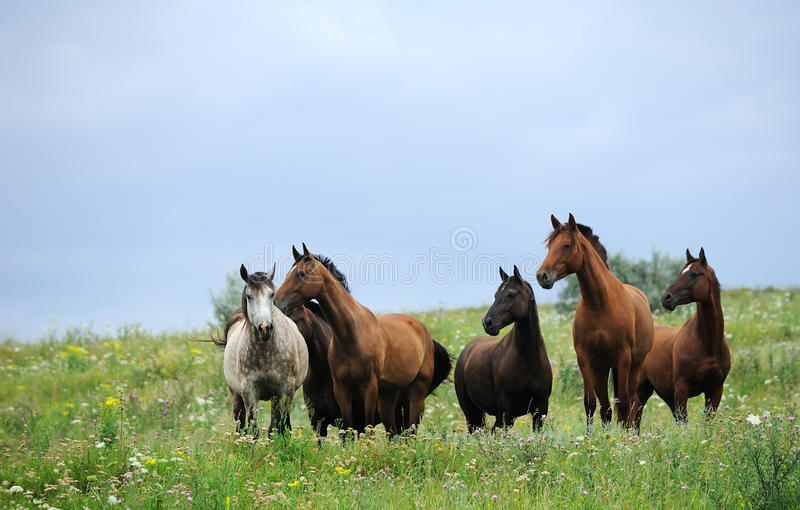 Herd of wild horses on the field