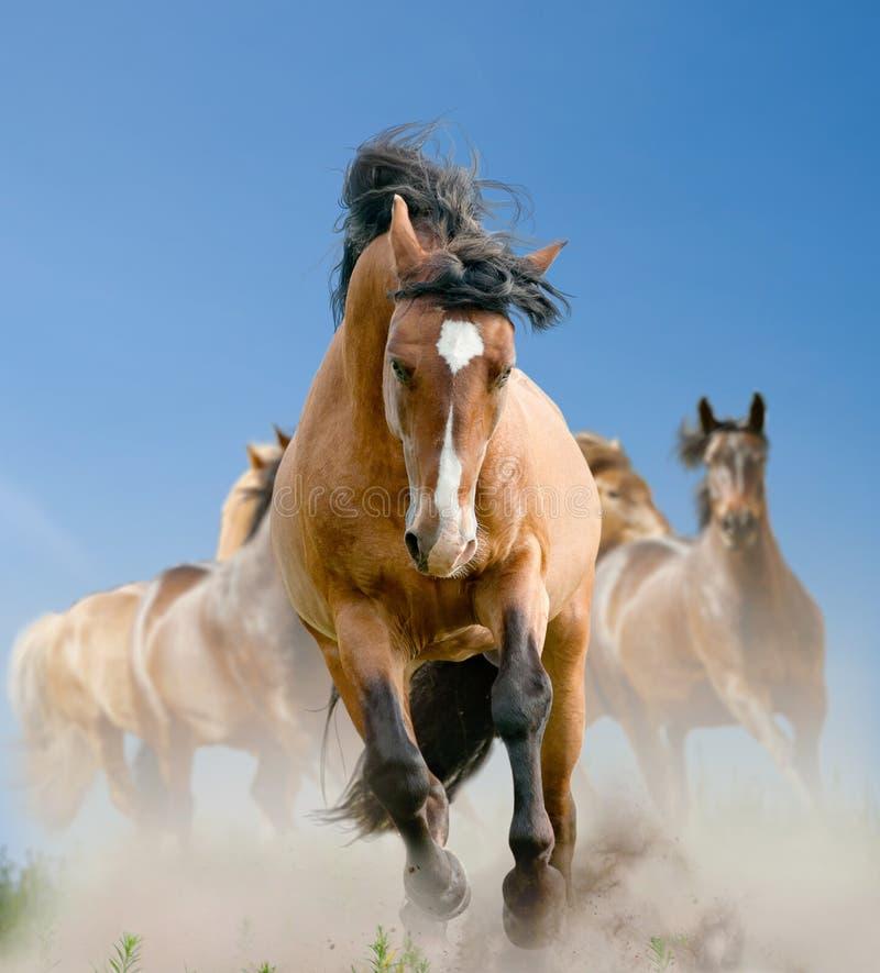 Herd of wild horses in summer stock photography