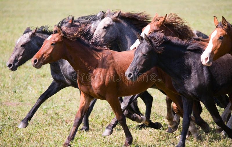 A herd of young horses stock images
