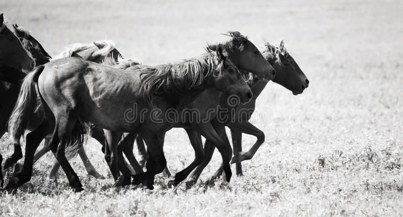 Download A herd of young horses stock photo. Image of pinto, image - 14295162