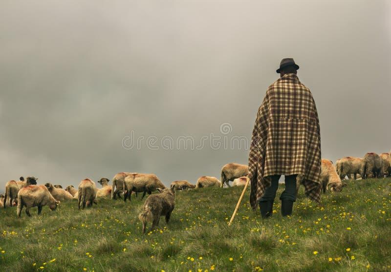 Herde och hans flock av får royaltyfria bilder