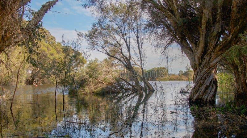 Herde sjö fotografering för bildbyråer