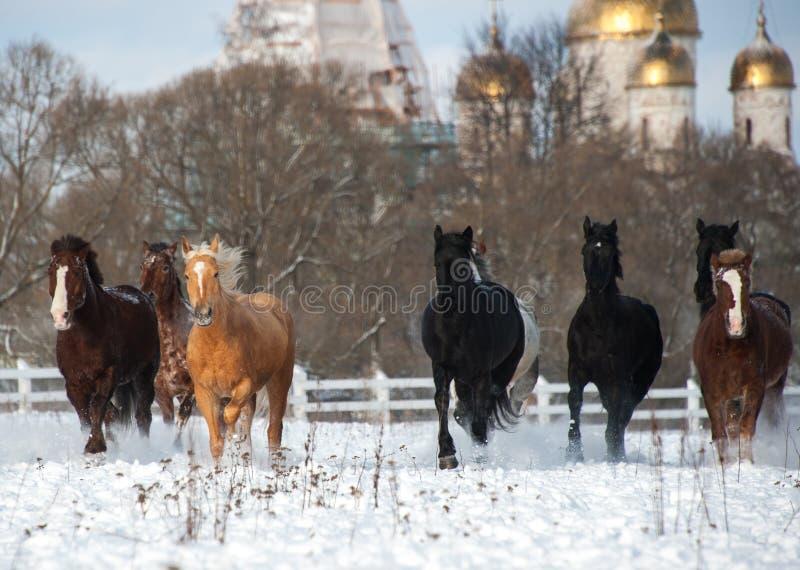 Herde von den Pferden, die auf dem Schneefeld laufen lizenzfreies stockbild