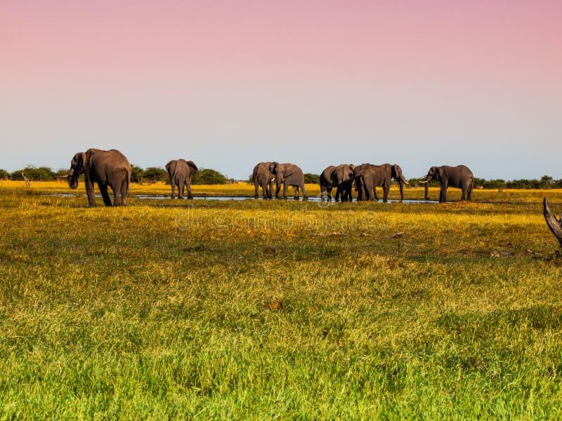 Herde von Elefanten lizenzfreies stockfoto
