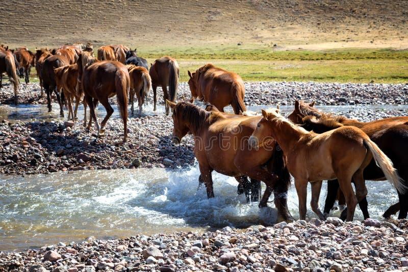 Herde von Pferden und von Fluss lizenzfreies stockbild