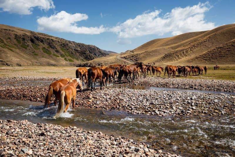 Herde von Pferden und von Fluss stockfotografie