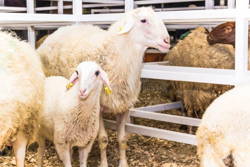 Herde von Schafen lizenzfreie stockbilder