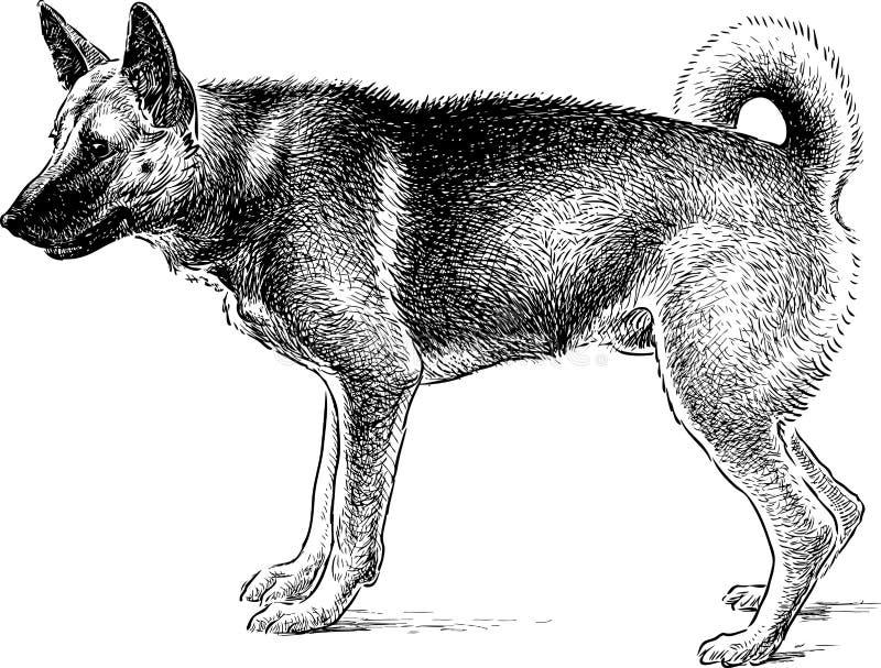 Herdehund på vakten stock illustrationer