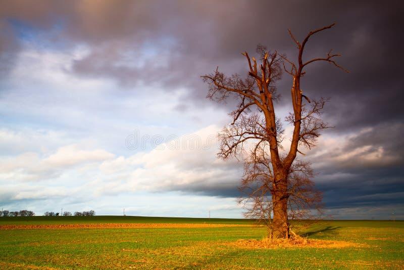 Herdenkingsboom op het lege gebied vóór zwaar onweer royalty-vrije stock fotografie