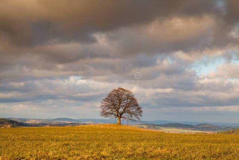 Herdenkingsesdoornboom op de mysticusplaats in Votice, Tsjechische Republi stock afbeeldingen
