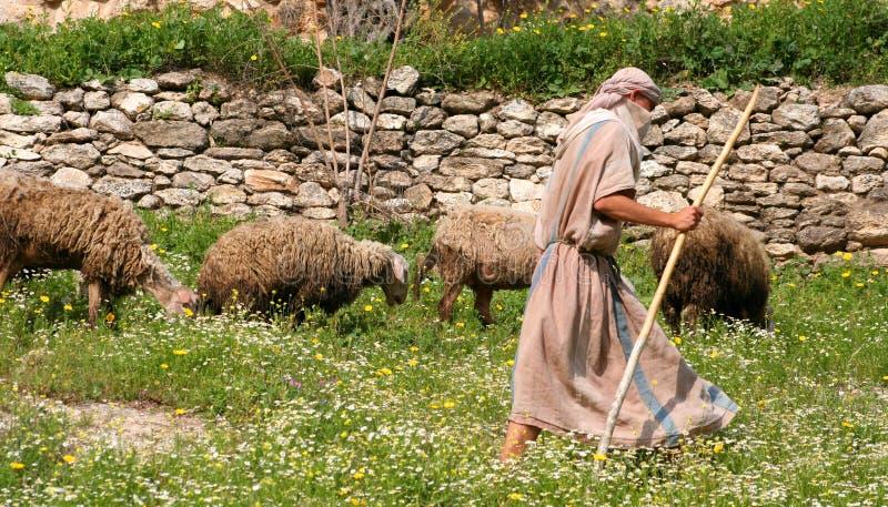 Herder en Troep royalty-vrije stock foto