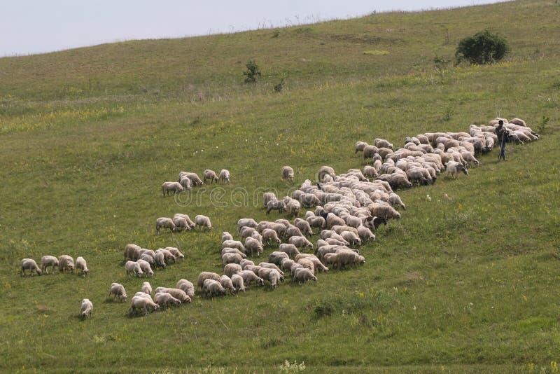 Herder en troeplandschap royalty-vrije stock afbeelding