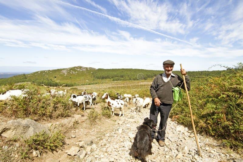 Herder in het platteland van Portugal stock afbeelding