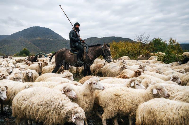 Herder met oplichter het berijden paard en hoedende groep schapen royalty-vrije stock afbeeldingen