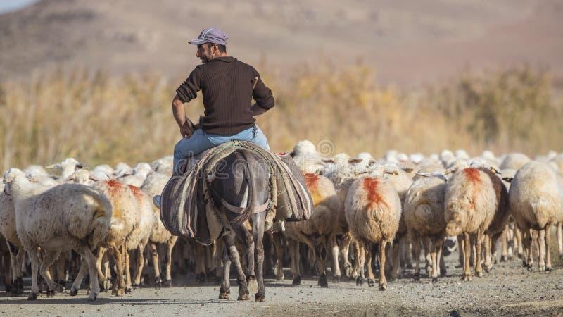 Herder op Ezel met Schapenkudde royalty-vrije stock afbeeldingen
