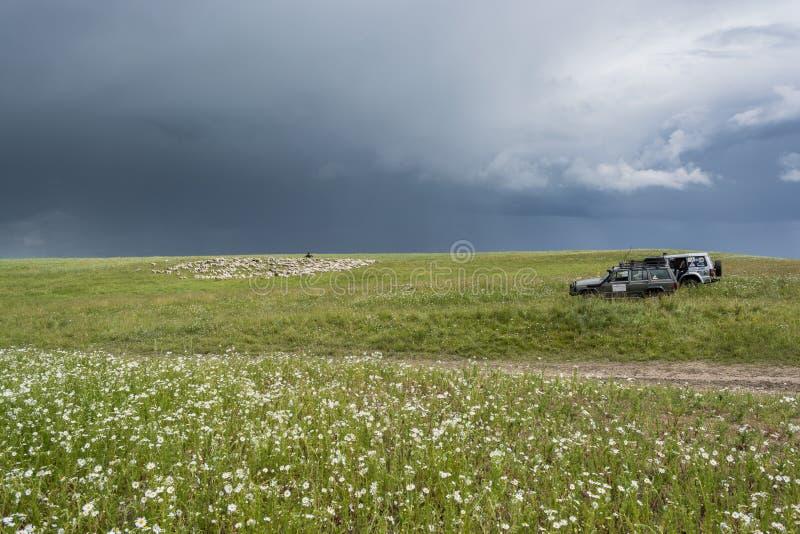 Herder With Sheep De troep weidt op de heuvel Groene Heuvel Licht onduidelijk beeld in agent om motie te tonen stock afbeeldingen