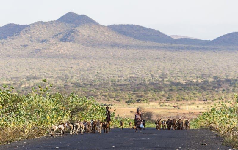Herders på huvudvägen i aftonen Omo dal ethiopia arkivbilder