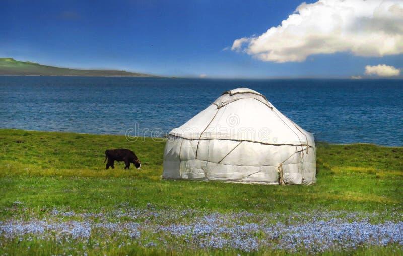 Herdetält Yurt med blåa blommor, Kirgizistanbergplats royaltyfri bild