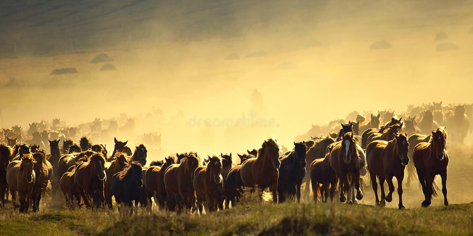 Download Herding in the morning stock photo. Image of grassland - 25763492