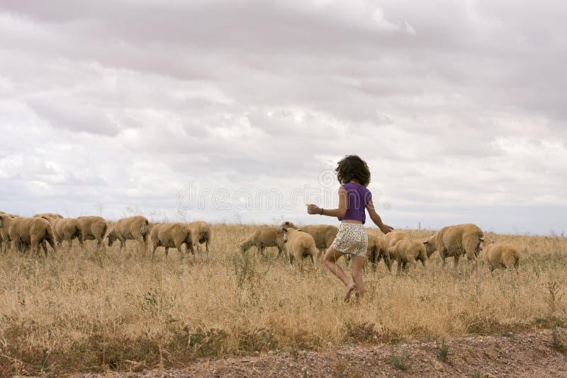 Download Herding Sheep stock image. Image of european, shepherd - 7667531