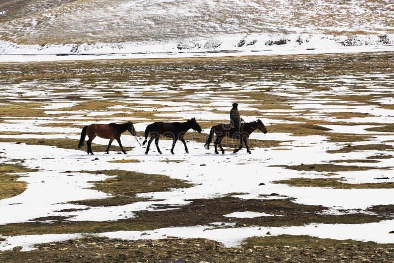 Herdsman royalty free stock images