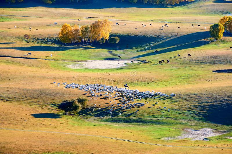 The herdsman and sheep on the prairie stock photography