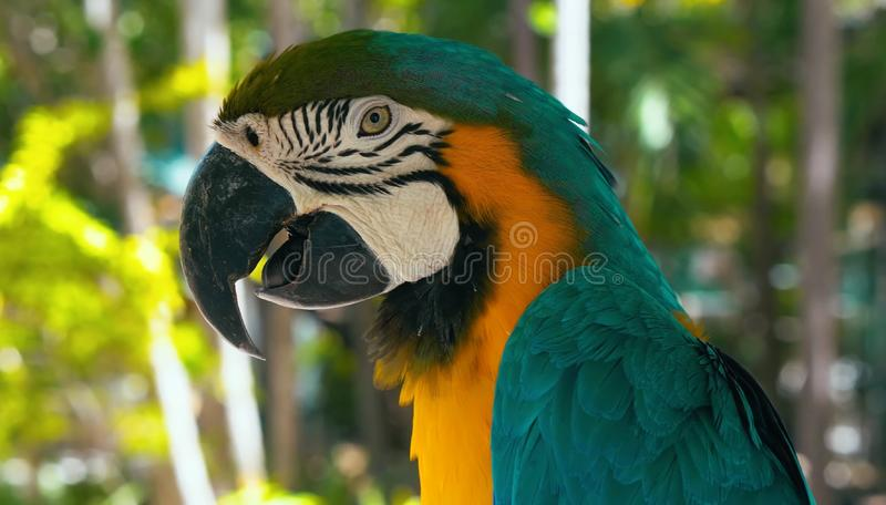 A very beautiful parrot in nature in Australia. royalty free stock photos