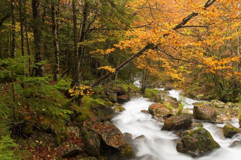 herfst Beuk en bergstroom royalty-vrije stock fotografie