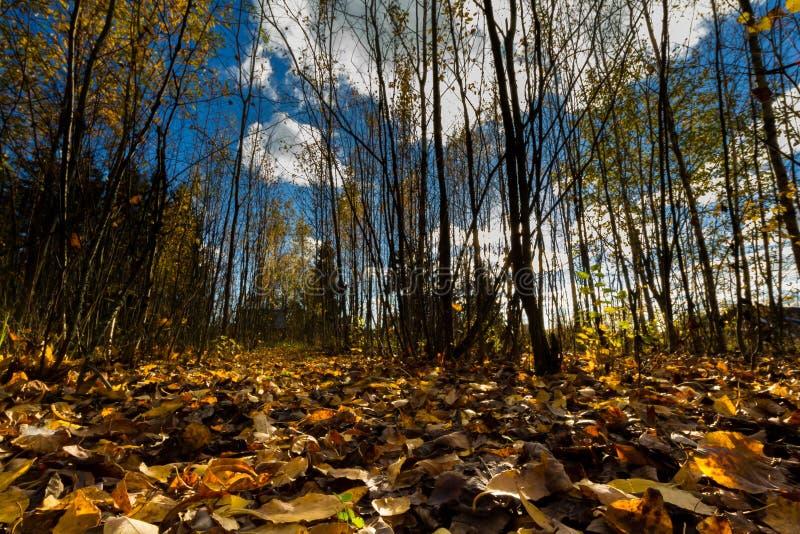 Herfst bos stock foto's