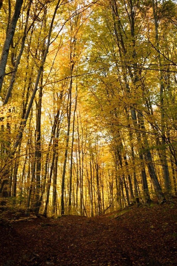 Herfst bos royalty-vrije stock afbeelding