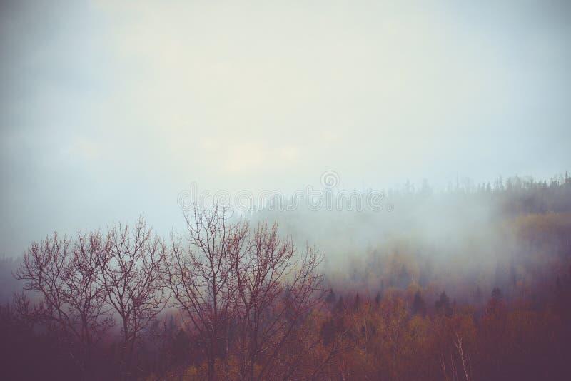 Herfst bos stock foto