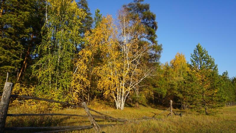 Herfst bos stock afbeeldingen