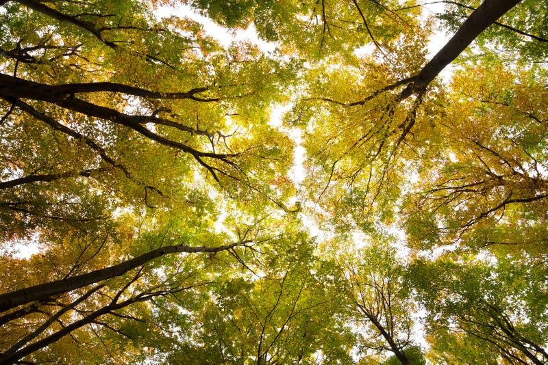 Herfst bosmilieu royalty-vrije stock foto