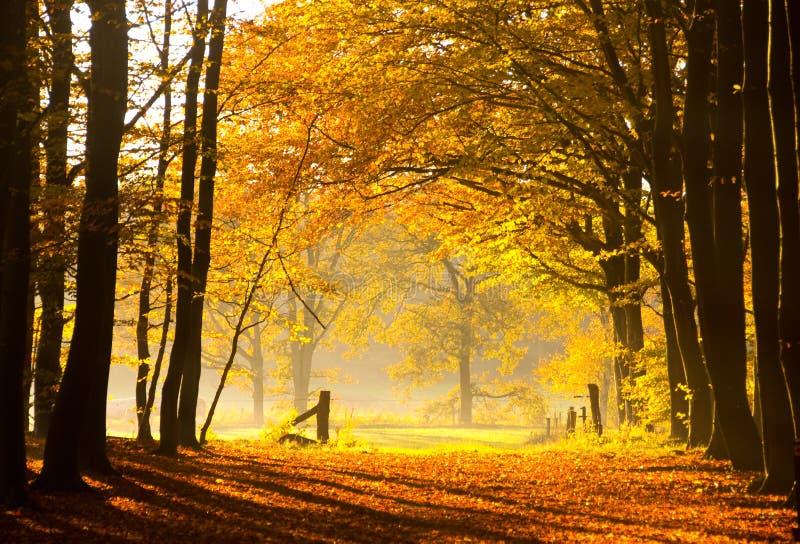 Herfst Dromen stock afbeeldingen