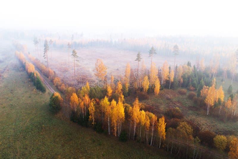 Herfst duidelijk gebied in de mist stock foto