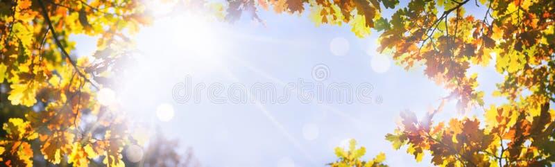 Herfst eiken bladeren op de zon stock afbeeldingen