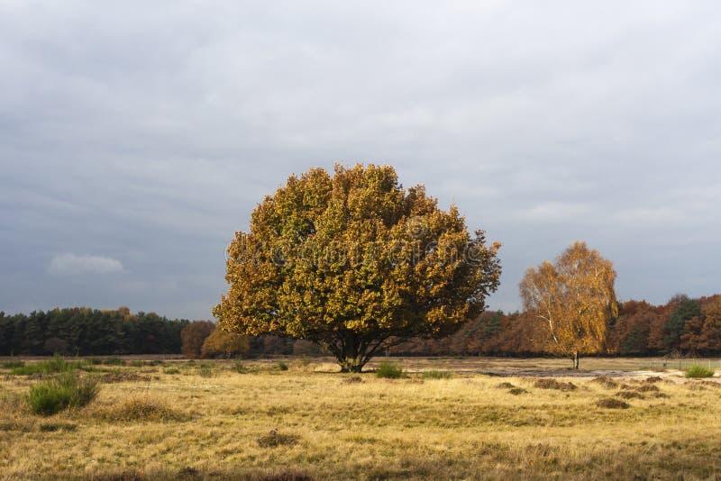 Herfst in Het Gooi, Het Gooi in autunno fotografia stock libera da diritti