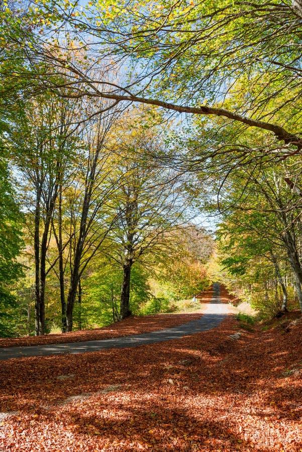 Herfst landelijke weg royalty-vrije stock afbeelding